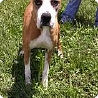 Adopt A Pet :: Addie - Staunton, VA