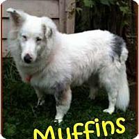 Adopt A Pet :: Muffins - Indiana, IN