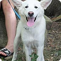 Adopt A Pet :: Luke - Osseo, MN