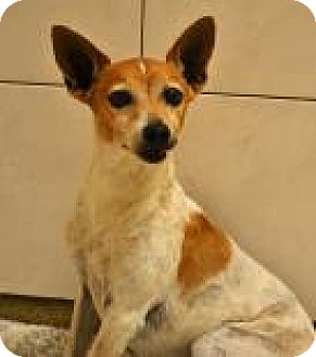 Terrier (Unknown Type, Small)/Terrier (Unknown Type, Small) Mix Dog for adoption in Miami, Florida - Machito