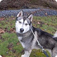 Adopt A Pet :: Tyson - Augusta County, VA