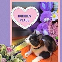 Adopt A Pet :: Jeanne - Arlington/Ft Worth, TX