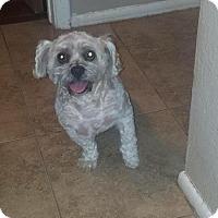 Adopt A Pet :: Jinxey - Peoria, AZ