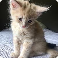 Adopt A Pet :: Tanner - Alamo, CA