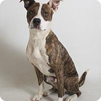 Adopt A Pet :: Terry - Redding, CA