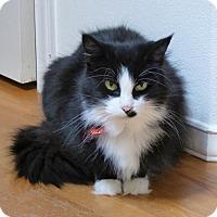 Adopt A Pet :: Ms. Magpie - Burlington, WA