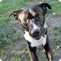Border Collie/Mixed Breed (Medium) Mix Dog for adoption in Lodi, California - EUGENE