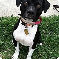 Adopt A Pet :: Pickles-$100 ADOPTION GRANT - Auburn, CA