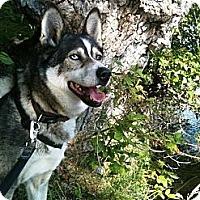 Adopt A Pet :: Teq - Wasilla, AK