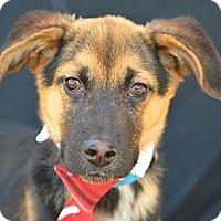 Adopt A Pet :: Vin Diesel - Plano, TX