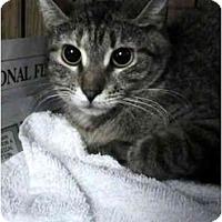 Adopt A Pet :: Juliet - Syracuse, NY