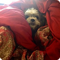 Adopt A Pet :: *Manny - PENDING - Westport, CT