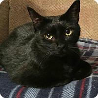Adopt A Pet :: Bob - Columbus, GA