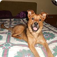 Adopt A Pet :: Callie - North Jackson, OH