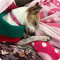 Adopt A Pet :: Princess - Oviedo, FL