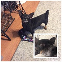 Adopt A Pet :: Newman LOVABLE GUY - Tunica, MS
