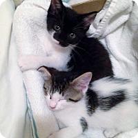 Adopt A Pet :: Daisy Ann (MO) Adoption Pending - Trenton, NJ