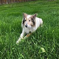 Adopt A Pet :: Tess - Circle Pines, MN