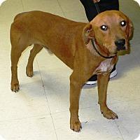 Adopt A Pet :: Tucker - Eastpoint, FL