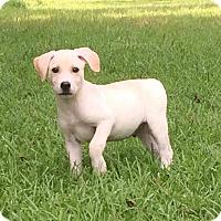 Adopt A Pet :: Terrance - Trenton, NJ