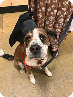 Shepherd (Unknown Type)/Border Collie Mix Dog for adoption in Boulder, Colorado - Sun