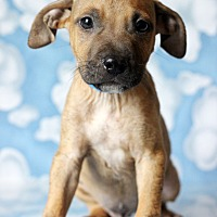 Adopt A Pet :: Zan - Waldorf, MD