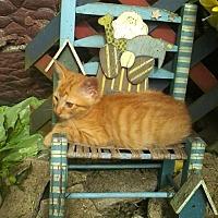 Adopt A Pet :: Kittens! - Alliance, OH