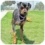 Photo 2 - Miniature Pinscher/Jack Russell Terrier Mix Dog for adoption in San Clemente, California - LOLA