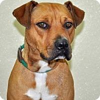 Adopt A Pet :: Simba - Port Washington, NY