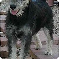 Adopt A Pet :: Booker - Mesa, AZ