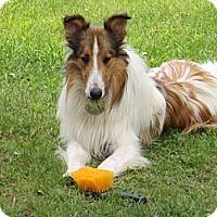 Adopt A Pet :: Waylon - Minneapolis, MN