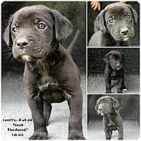 Adopt A Pet :: Loretta - Evansville, IN