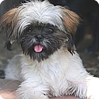 Adopt A Pet :: MILEY - Salt Lake City, UT