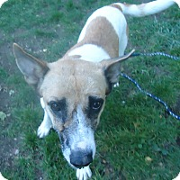 Adopt A Pet :: Maggie - Ashland, OR