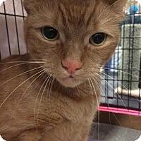 Adopt A Pet :: Brooklyn - Pittstown, NJ