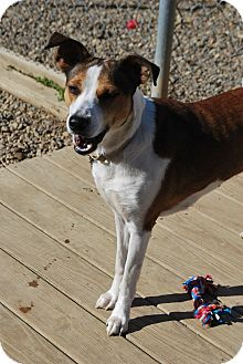 Collie Mix Dog for adoption in Berea, Ohio - Penny