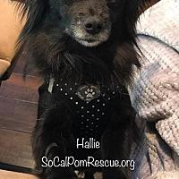 Adopt A Pet :: Hallie - Irvine, CA