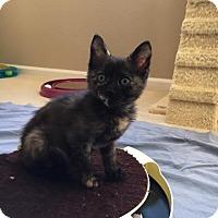 Adopt A Pet :: Iris - Alamo, CA