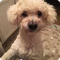 Adopt A Pet :: Marito - Sterling Heights, MI