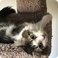 Adopt A Pet :: Lilo - Romeoville, IL