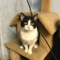 Adopt A Pet :: Elvira - BATH, NY