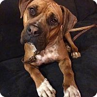 Adopt A Pet :: Oden - Lompoc, CA