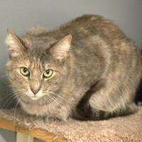 Adopt A Pet :: Mystery - Elk Grove Village, IL