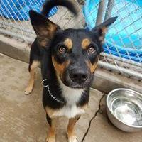 Adopt A Pet :: Kirby - Aberdeen, SD