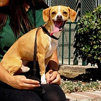 Adopt A Pet :: Rico - Lathrop, CA