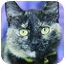 Photo 2 - Domestic Shorthair Cat for adoption in Brenham, Texas - Patches