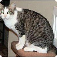 Adopt A Pet :: Antoinette - Tucson, AZ