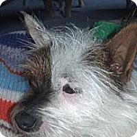 Adopt A Pet :: Tinkerbell - Lucerne Valley, CA