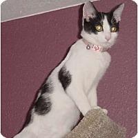 Adopt A Pet :: Elsie - Franklin, NC