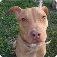 Adopt A Pet :: Dilbert - Warren, NJ